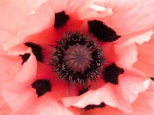 reikiflower