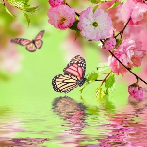 butterflywater